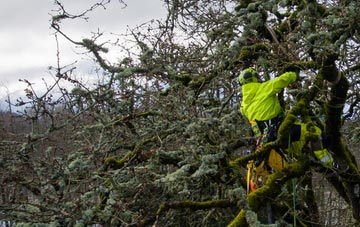 experienced Newry And Mourne arborists are needed