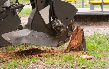 professional Newry And Mourne stump grinding services
