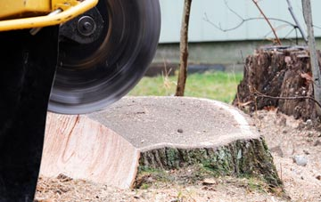 tree stump grinding Newry And Mourne
