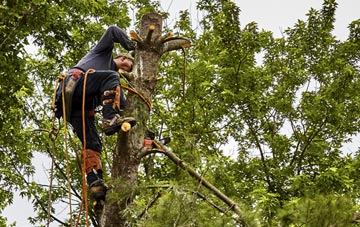 tree surgeon Newry And Mourne