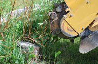 free Newry And Mourne tree stump grinding quotes