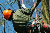 free Newry And Mourne tree surgeon quotes